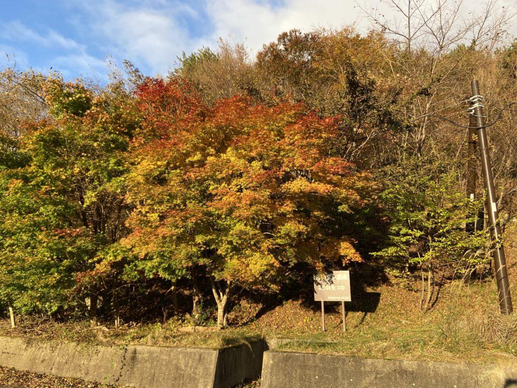 紅葉した木の画像
